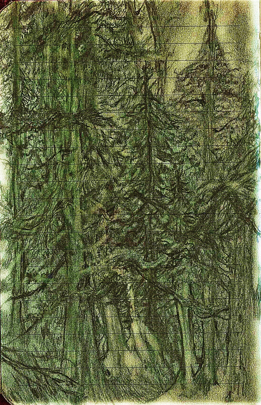 Banf-forest-4