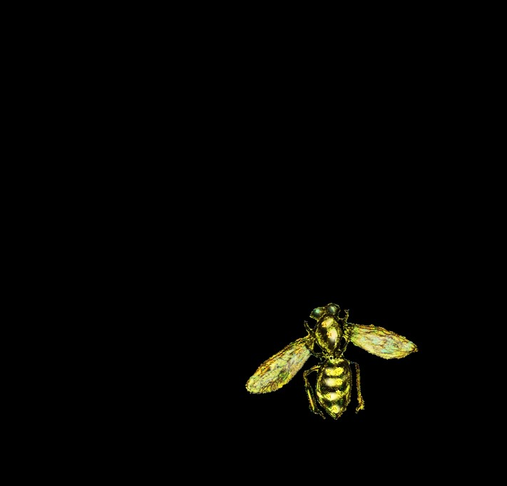 Bee-cut-off-from-the-hive